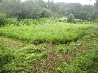 夏の畑.JPG